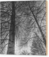 Majestic Trees Wood Print