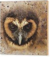 Malaysian Brown Wood Owl Wood Print