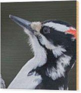 Male Hairy Woodpecker Wood Print