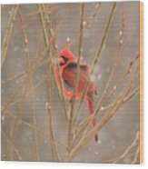 Male Northern Cardinal In Winter Wood Print