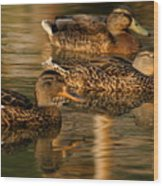 Mallards Swimming In The Water At Magic Hour Wood Print