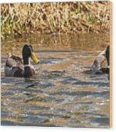 Mallards On Pond Wood Print