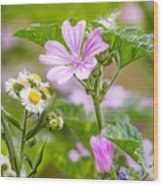Malva And Chamomile In The Meadow Wood Print