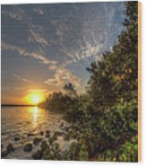 Mangrove Sunrise Wood Print