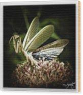 Mantis 22 Wood Print