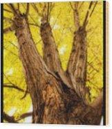Maple Tree Portrait 2 Wood Print