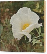 Matilija Poppy I Wood Print