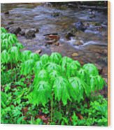 May-apples And Middle Fork Of Williams River Wood Print