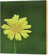 Meadow Salsify Wood Print