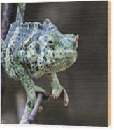 Mellers Chameleon Portrait Wood Print