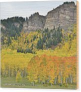 Million Dollar Highway Aspens Wood Print