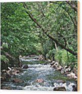 Minnehaha Creek Wood Print