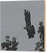 Mississippi Kite In Flight Wood Print