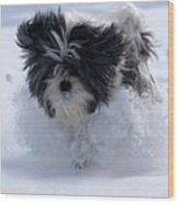 Misty Runs Through The Snow Wood Print