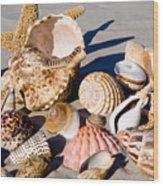 Mix Group Of Seashells Wood Print