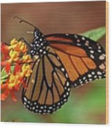 Monarch On Milkweed Wood Print