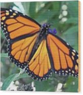 Monarch - Perfection Wood Print