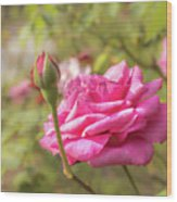 Moondrops 85 Hybrid Tea Rose, Pink Rose Originally Produced By  Wood Print