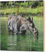 Moose In The Elk Creek Beaver Ponds Wood Print