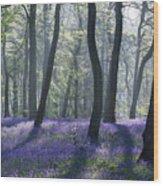 Morning Bluebells Wood Print