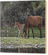 Mother And Foal Wild Salt River Horses Wood Print
