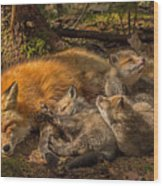 Mother Fox And Her Kits Wood Print