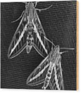 Moths Wood Print