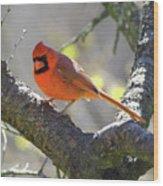 Mr Northern Cardinal Wood Print