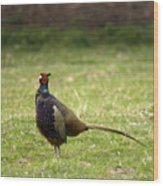 Mr Pheasant Wood Print