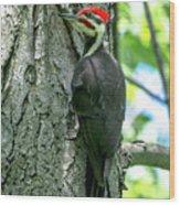 Mr. Pileated Woodpecker Wood Print