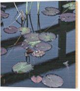 Msu Spring 8 Wood Print
