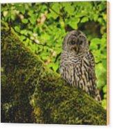 Muir Woods Owl Wood Print