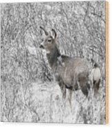 Mule Deer In Winter In The Pike National Forest Wood Print
