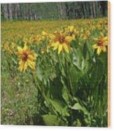 Mule Ear Sunflowers Wood Print