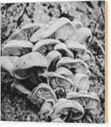Mushroom Art Wood Print
