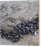Mussels Rock Wood Print
