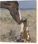 Mustang Mare And Foal Wood Print