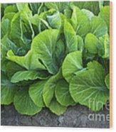 Mustard Greens Wood Print