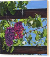 Napa Valley Inglenook Vineyard -2 Wood Print