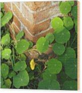 Nasturtium Leaves Wood Print