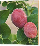 Natal Plums On Branch Wood Print