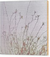 Nerve Cell Culture, Sem Wood Print