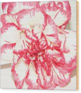 Nice Carnation Wood Print