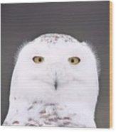 Snowy Owl 3256 A.k.a. Smiling Owl Wood Print