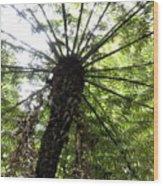 Nz Fern Wood Print