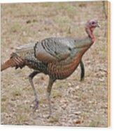 Oceola Turkey Wood Print