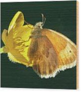 Ochre Ringlet Butterfly Wood Print