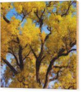 Old Giant  Autumn Cottonwood Orton Wood Print