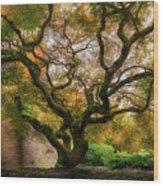 Old Japanese Maple Tree Wood Print