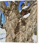 Old Willow Tree Wood Print
